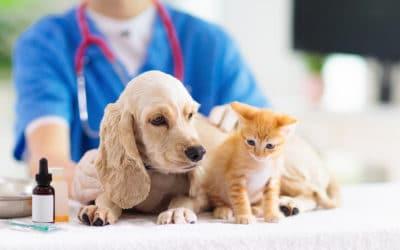 COVID-19 Update: Sick Pets