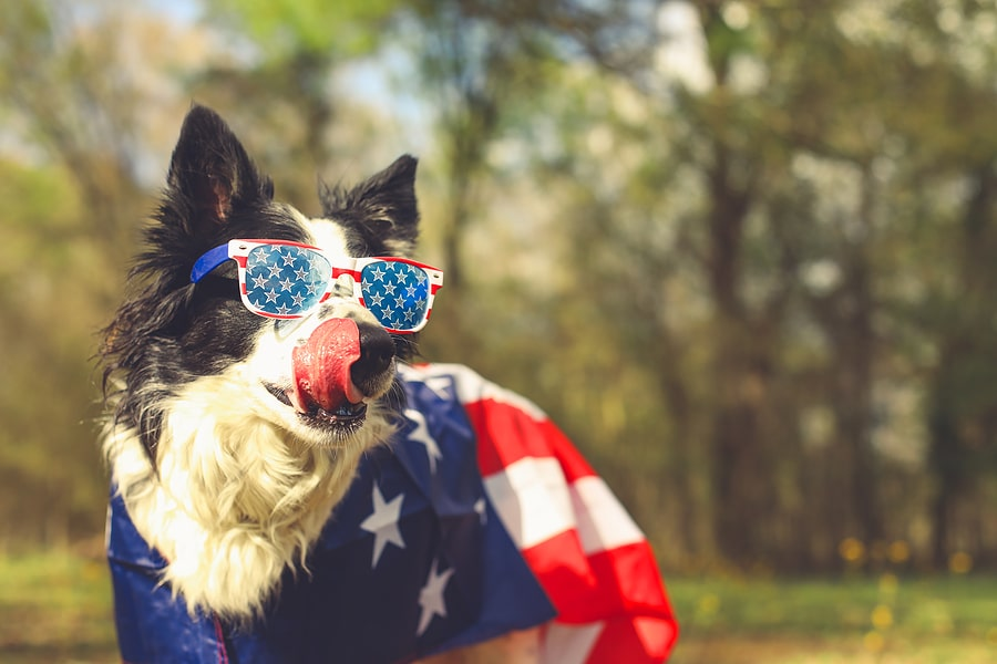Your Pets & Fireworks
