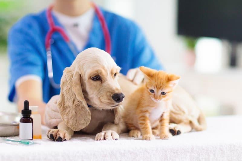 Pet Wellness Plans in Macon, GA