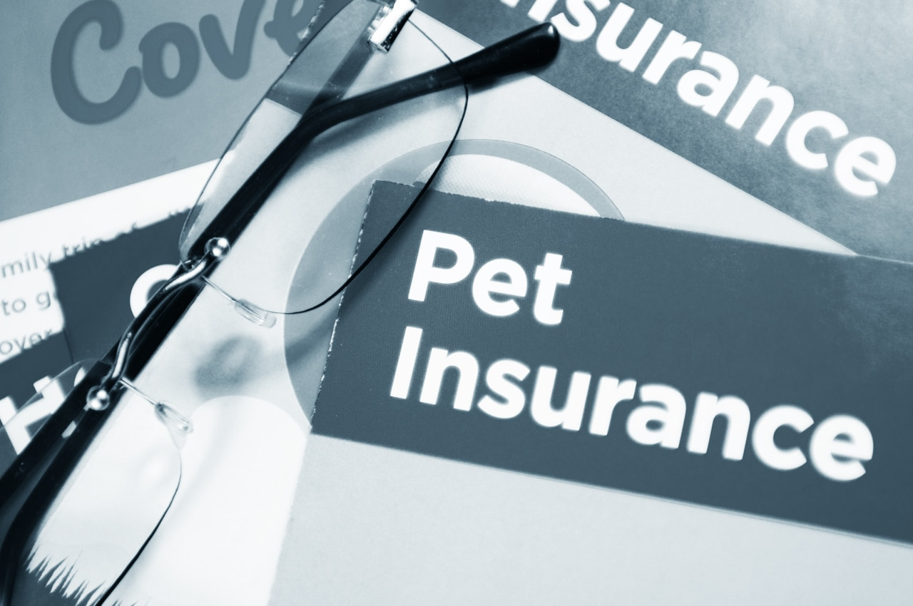 Pet Insurance We Accept