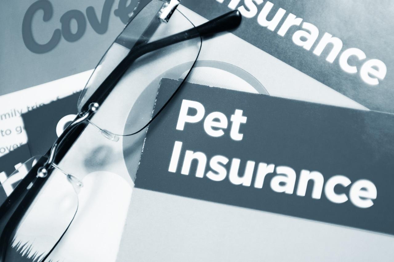 Pet Insurance We Accept