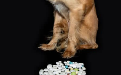 Top Ten Medications Poisonous to Your Pets