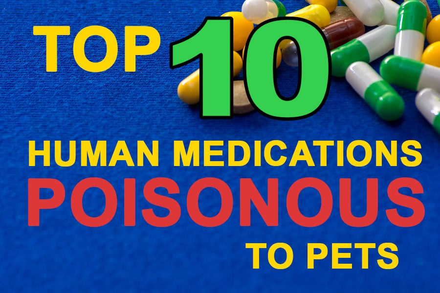 Top 10 Most Common Medications Harmful to Pets